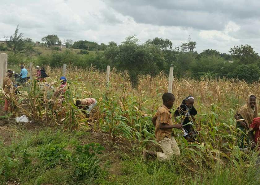 Kinder helfen freudig auf der Farm