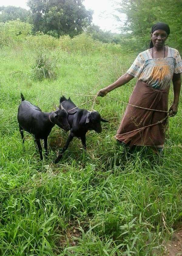 Frau mit Ziegen